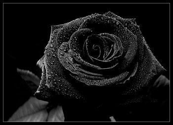 Tuerie de Toulouse deuil pour Gabriel, Arieh, Myriam, Jonathan et  Abel, Mohamed et Imad